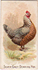 1891 N20 Prize and Game Chickens