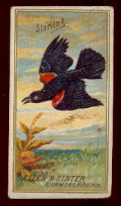 buying old non-sports cards N4 birds of america